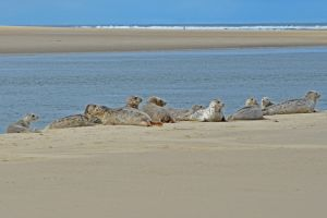 Waldport Harbor Seals