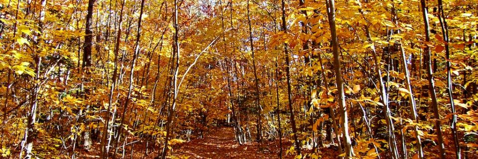 Fall Forest in the Northeast 4x12.jpg